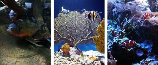 Pihrana, Coral and Nemo