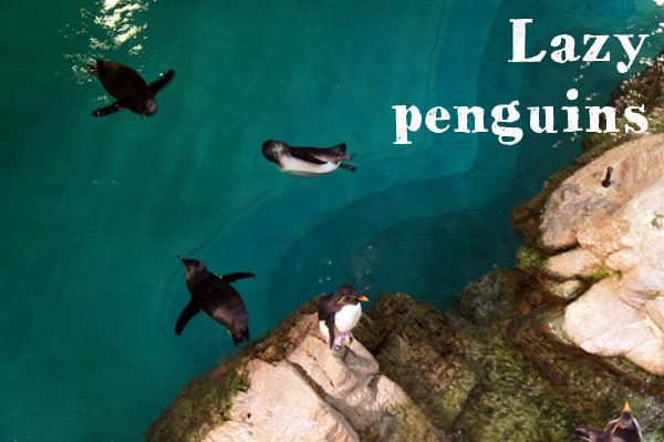Lazy Penguins at New England Aquarium
