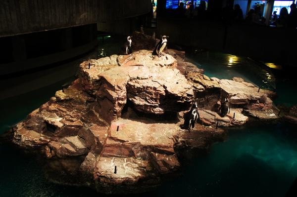 Penguins at New England Aquarium