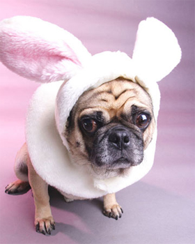 Easter Puggy - Martha Stewart