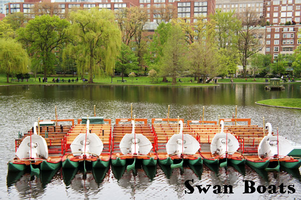 Swan Boats - Boston Common