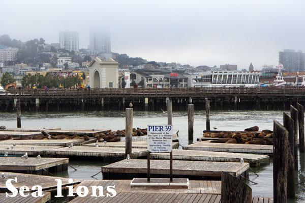 Sea Lions - Pier 39 - San Francisco - www.maathiildee.com