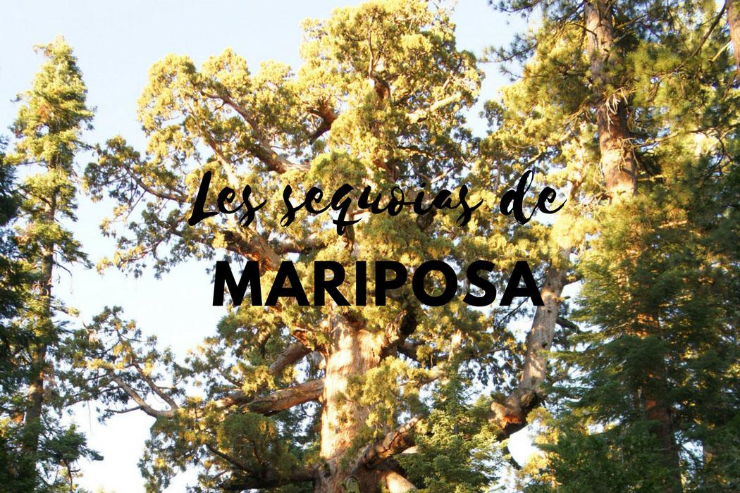 Les sequoias de Mariposa Yosemite Californie