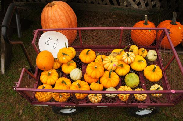 Comment faire une citrouille d 39 halloween jack o lantern en 5 tapes le blog usa de mathilde - Comment creuser une citrouille ...
