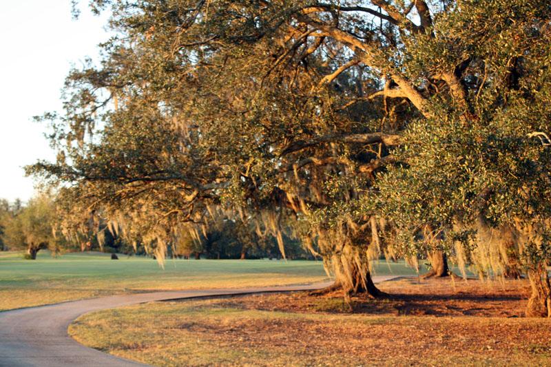 Les arbres mousseux, New Orleans