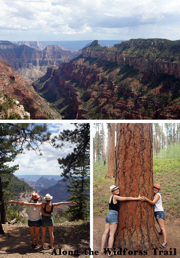 Widforss Trail - Grand Canyon - Arizona
