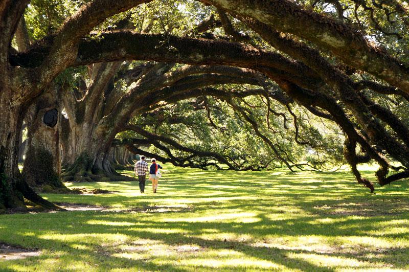 où suis je Martin 02 juillet trouvé par Martine - Page 2 Sous-les-arbres