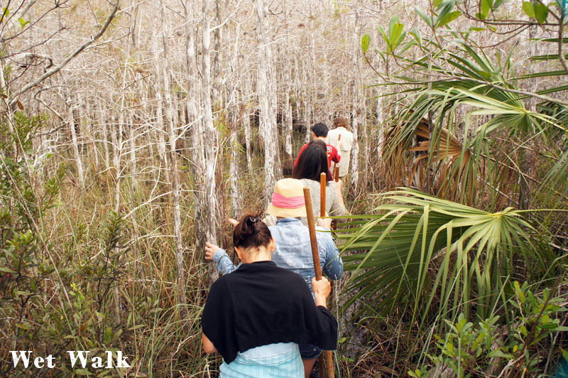 Wet tour, Everglades, Florida