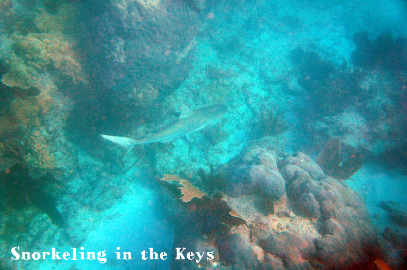 Snorkeling in the Keys, Florida