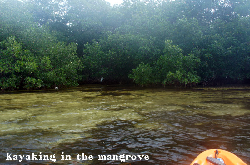 Kayaking in the mangrove, Keys, Florida