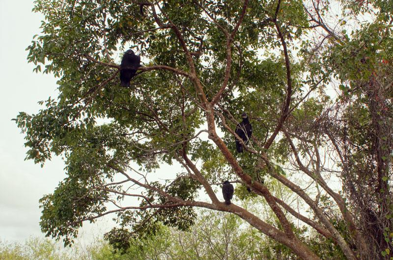 Anhinga Trail, Everglades, Florida - Anhinga