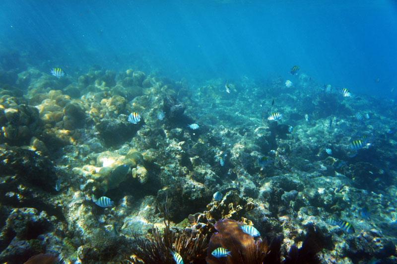 Coral Reef Florida Keys
