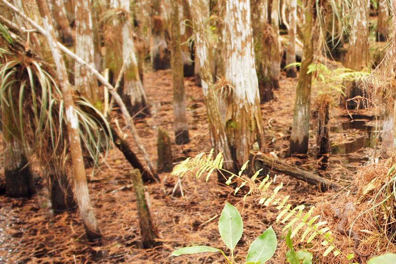 Snake, Wet Tour Everglades, Florida