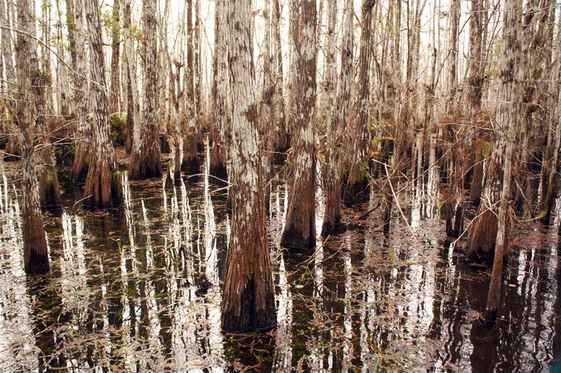 Wet tour Everglades, Florida