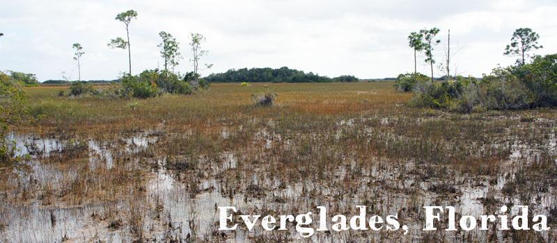 Everglades, Florida, les grands parcs americains