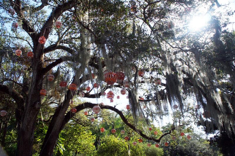 Chinese tree - Fairchild Garden - Coral Gables - Florida