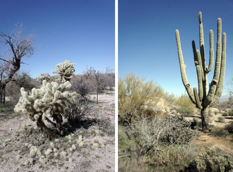 Arizona Team Building dans le désert
