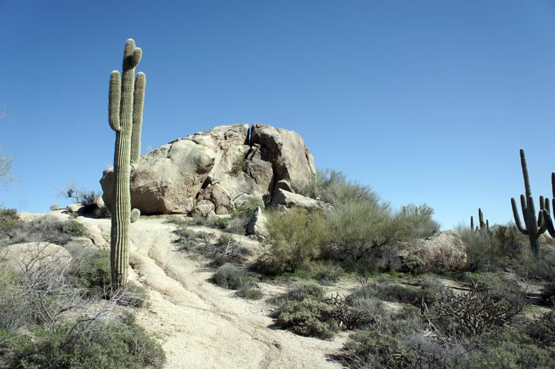 Arizona Team Building les cactus dans le désert
