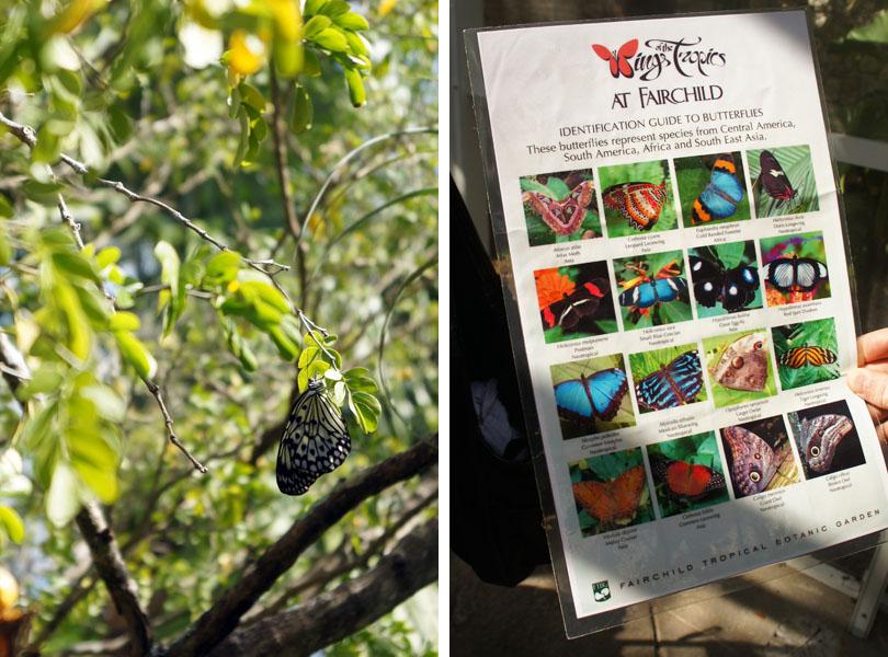 La chasse aux papillons - Fairchild Garden, Coral Gables, Miami