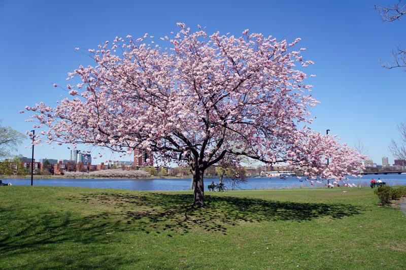 Le printemps boston le blog usa de mathilde for Semer le gazon au printemps