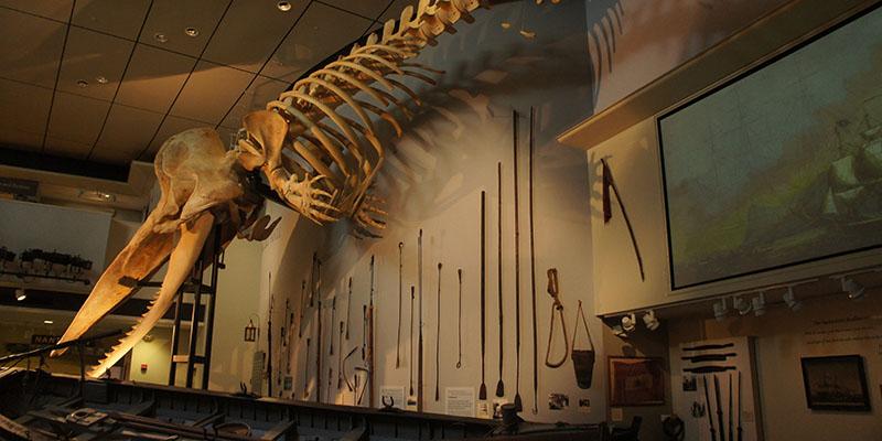 Dans le musée de la baleine - Nantucket
