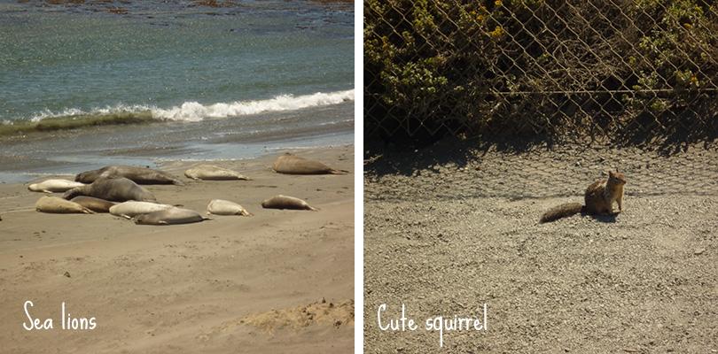 Road trip entre amis - Sea lions and squirrel