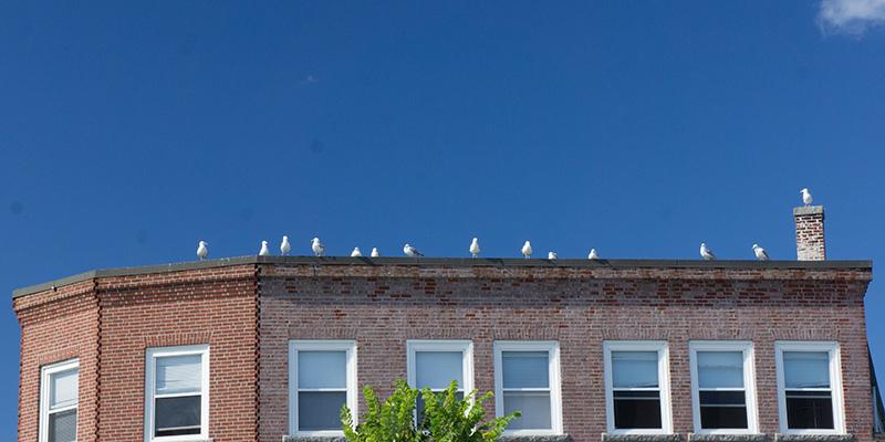 Des oiseaux, Gloucester MA
