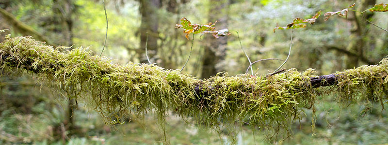 Hoh national rainforest - Olympic National Park 1