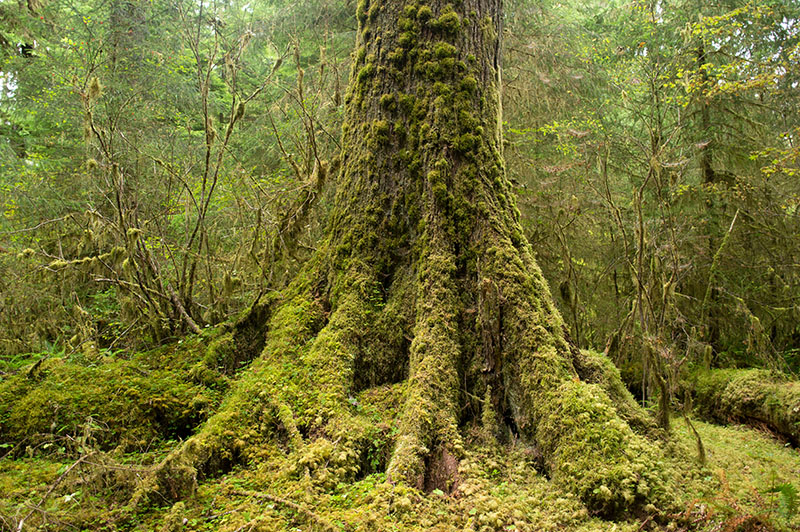 Hoh national rainforest - Olympic National Park 3