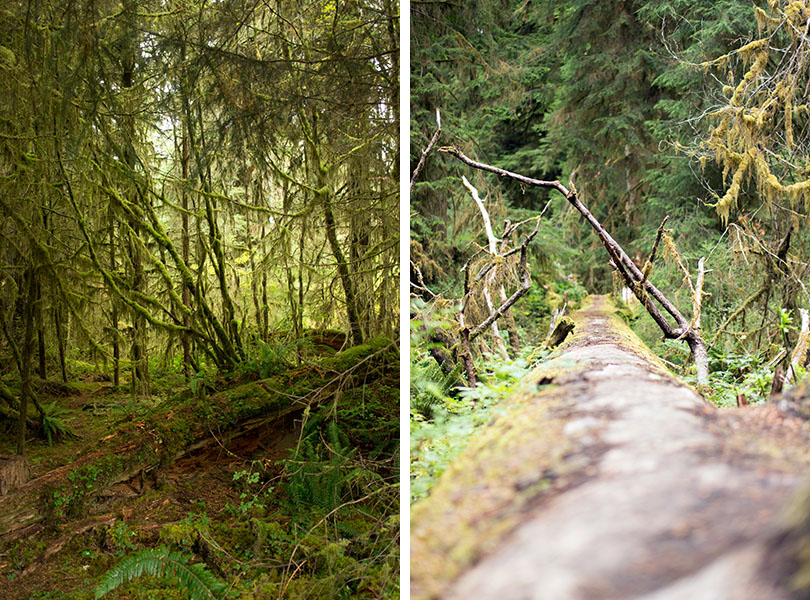 Hoh national rainforest - Olympic National Park 5