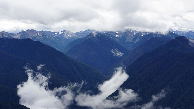 Hurricane Ridge - Olympic National Park 1