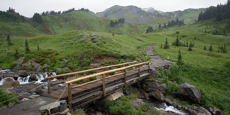 Grove of the Patriarch Trail - Mount Rainier National Park - Paradise Valley