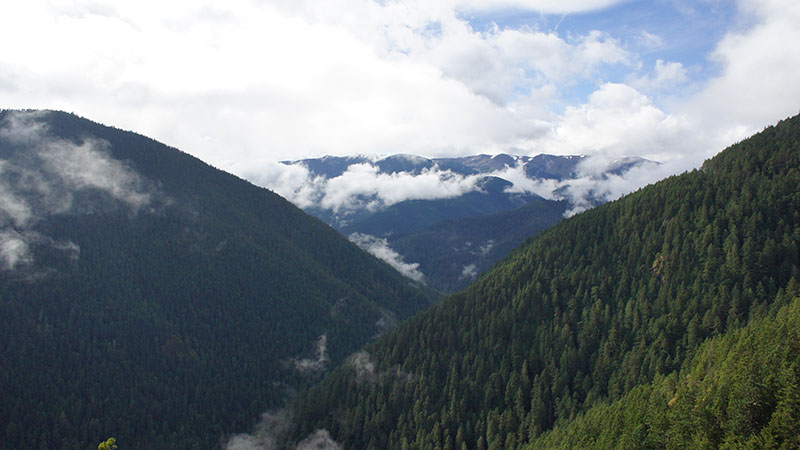 Hurricane Ridge - Olympic National Park 4