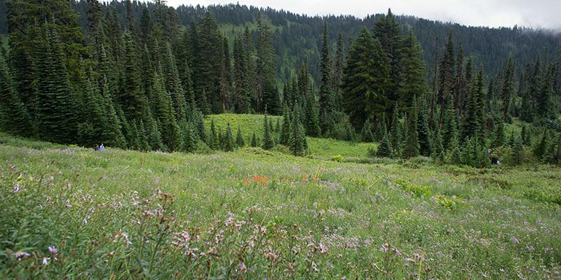 Paradise Valley - Mount Rainier National Park 1