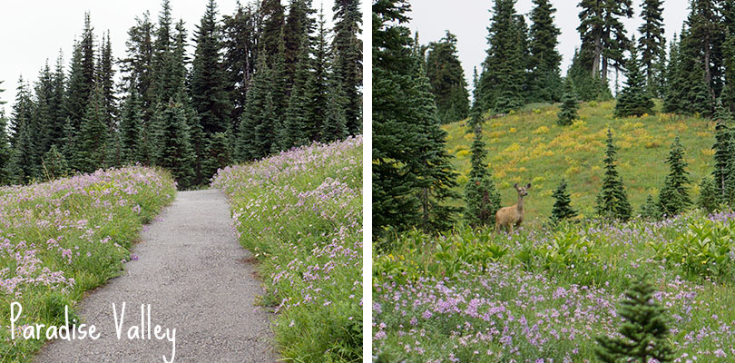 Paradise Valley - Mount Rainier National Park - flowers and deer