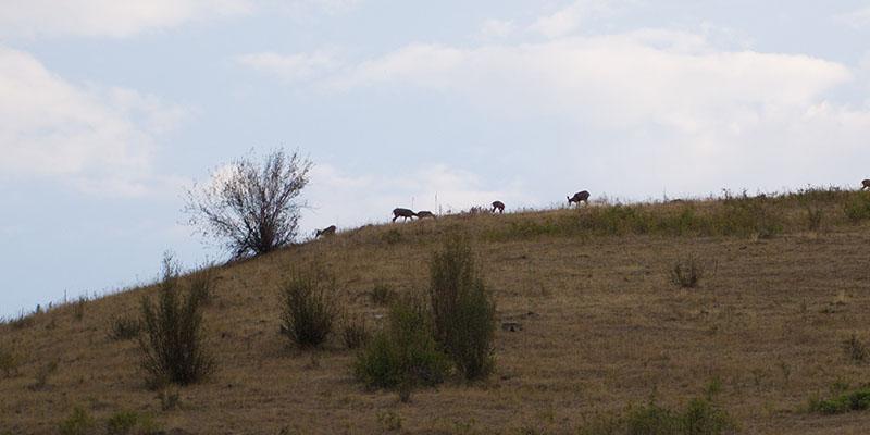 Bison Range Montana 4