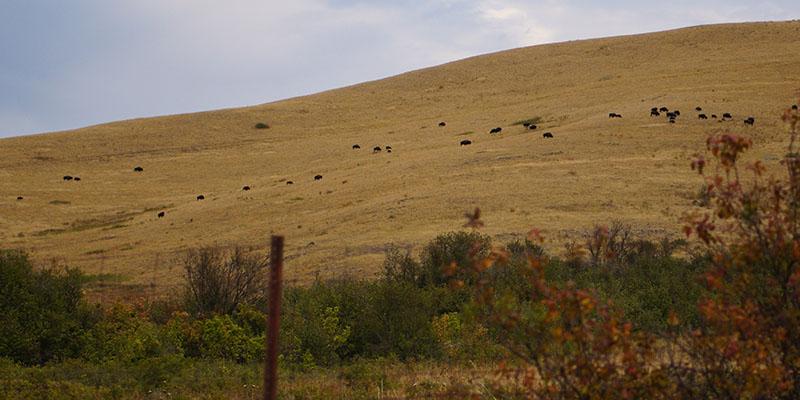 Bison Range Montana 5