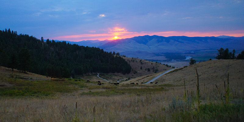 Bison Range Montana 7