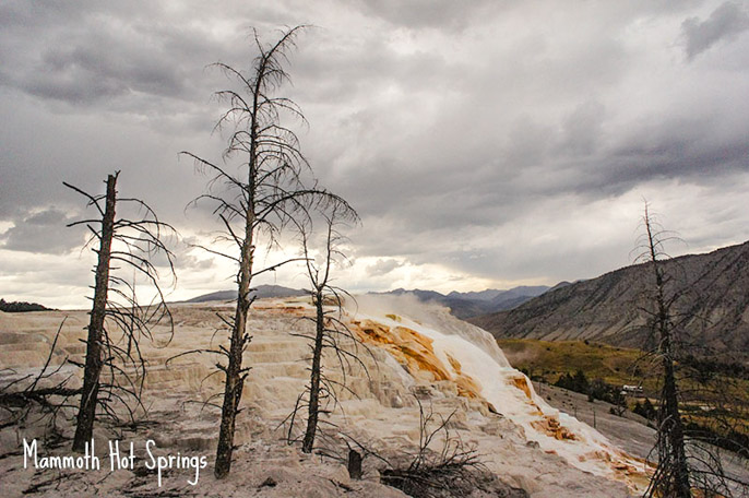 Mammoth Hot Springs - Yellowstone National Park 1