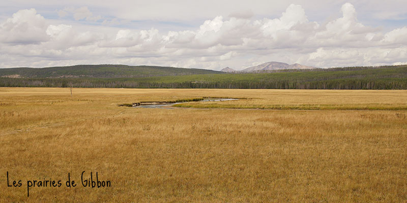 Gibbon Meadows - Yellowstone National Park