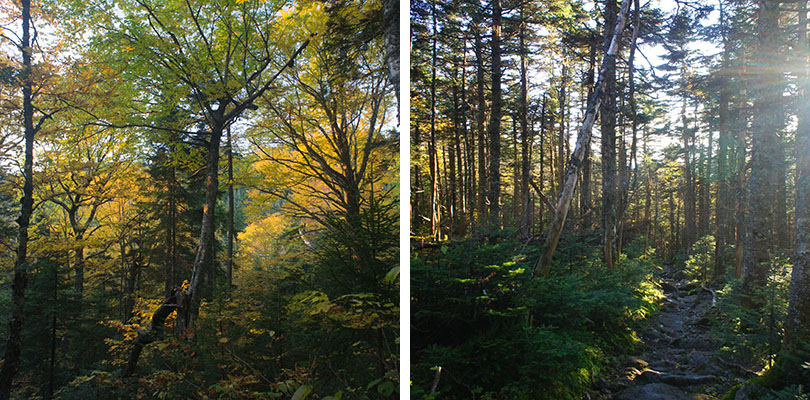 Foret New Hampshire
