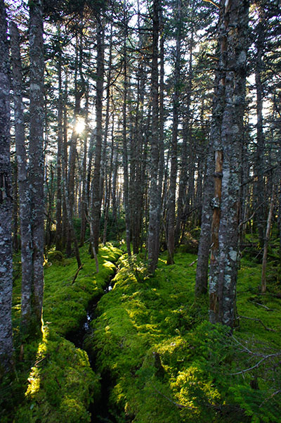 Foret New Hampshire 1