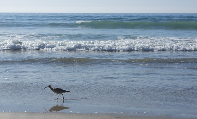 Bird at Torrey Pines Beach, San Diego, California