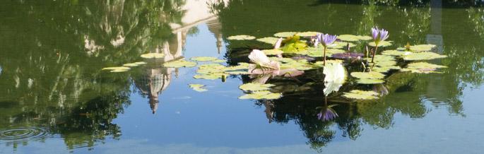 Jardin botanique, Balboa Park, San Diego, Californie - Nénuphars