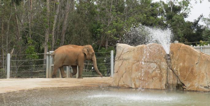 Elephant - Zoo de San Diego