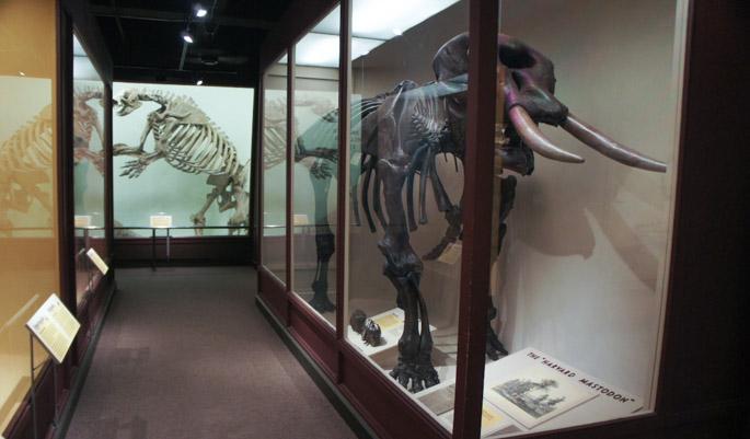 Harvard Mastodon