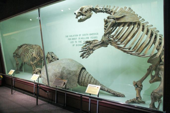 Dinosaurs - Harvard Museum