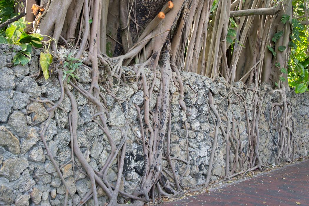 Coconut Grove - végétation