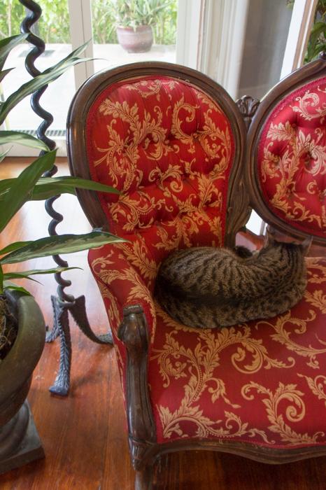 Dans la maison d'Hemingway - chat