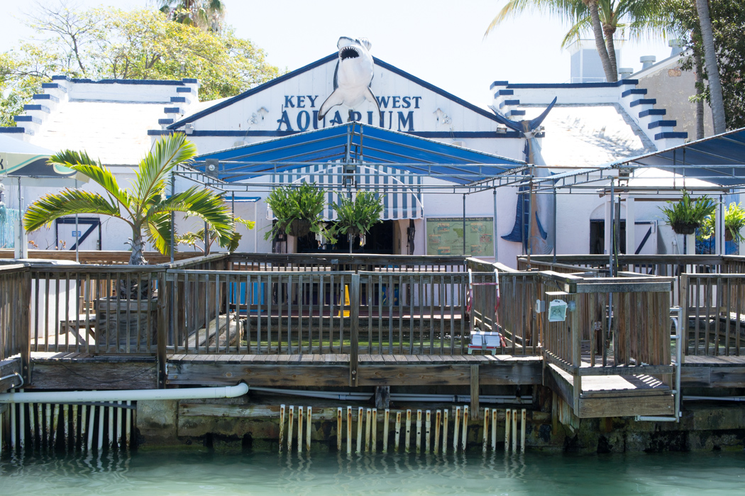 Key West Aquarium - Floride